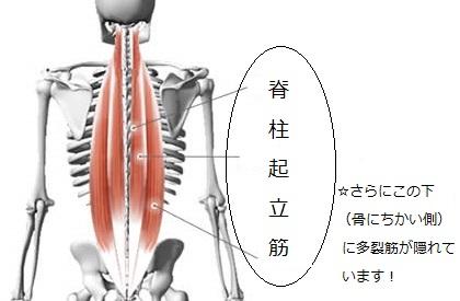 脊柱起立筋2